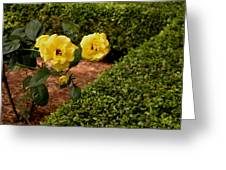Roses In The Hedge Greeting Card