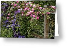 Roses On The Fence Greeting Card
