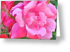 Roses Perfectly Pink Greeting Card