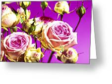 Roses (rosa Sp.) Greeting Card