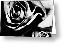 Roses Study 1 Greeting Card