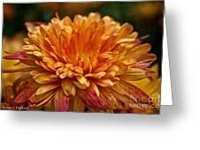 Rosey Glow Mum Greeting Card