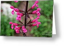 Rosey Leaf Sage Greeting Card