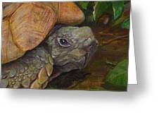 Rosie The Turtle Greeting Card