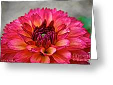 Rosy Dahlia Greeting Card