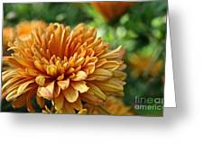 Rosy Glow Mum Greeting Card