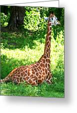 Rothschild Giraffe Greeting Card