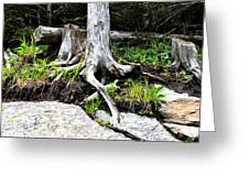 Rotted Roots Greeting Card