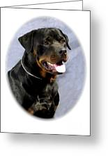 Rottweiler 370 Greeting Card