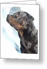 Rottweiler 923 Greeting Card