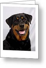 Rottweiler 96 Greeting Card