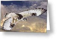 Rough Legged Hawk In Flight Greeting Card