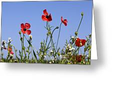 Rough Poppy (papaver Hybridum) Greeting Card