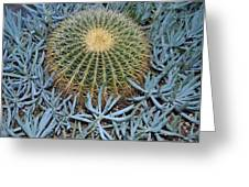 Round Cactus Greeting Card