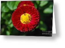 Round Red Flower Greeting Card