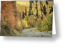 Routt National Forest Greeting Card