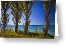 Row Of Cypress Trees At Point Betsie In Michigan No.0924 Greeting Card
