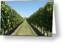 Row Of Grapevines In Vineyard Greeting Card by Dave & Les Jacobs