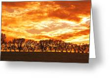 Row Of Trees Greeting Card
