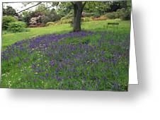 Rowallane Garden, Co Down, Ireland Wild Greeting Card