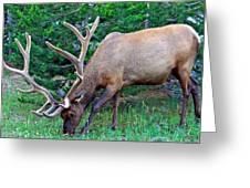 Royal Bull Elk Greeting Card