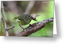 Ruby-crowned Kinglet Nabs A Moth Greeting Card