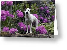 Ruby In The Garden Greeting Card