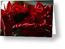 Ruby Petals Greeting Card