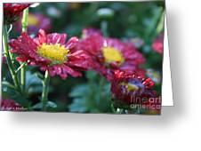 Ruby Rain Greeting Card