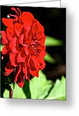 Ruby Red Dahlia Greeting Card