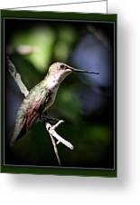 Ruby-throated Hummingbird - Just Beautiful Greeting Card