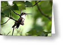 Ruby-throated Hummingbird - Shade Greeting Card