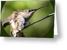 Ruby-throated Hummingbird  - The Stretch Greeting Card