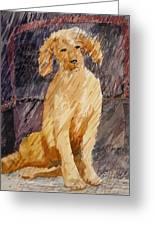 Rudy In The Rain Greeting Card