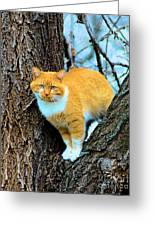 Rudy The Escape Artist Greeting Card by Cheryl Poland