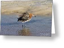 Ruffled Reddish Egret  Greeting Card