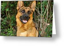 Ruger Greeting Card