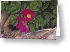 Rugosa Rose And Driftwood Greeting Card