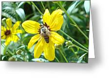 Rumble With A Bee Greeting Card