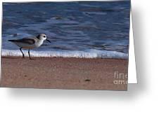 Run By The Sea Greeting Card