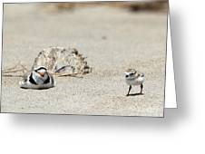 Run Little One  Piping Plover Greeting Card