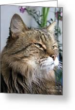 Runcius- My King Kitty Enjoying The Sunshine Greeting Card