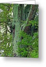 Rural Trees Close Up Greeting Card