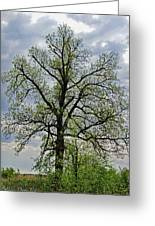 Rural Trees I Greeting Card