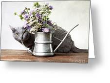 Russian Blue 03 Greeting Card