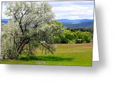 Russian Olive Greeting Card