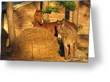 Rusty And Brown Sugar Greeting Card