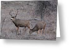 Rutting Buck Greeting Card