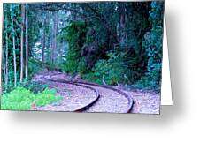 S Curve In The Forest Greeting Card