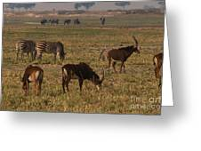 Sable Antelope With Zebra And Elephants Greeting Card